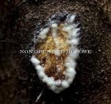NON OPUS DEI / MOROWE - split DigiCD