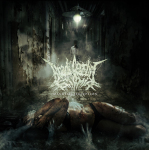 BRADI CEREBRI ECTOMIA - mangled perception CD